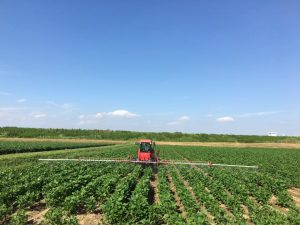 みらい農場大豆